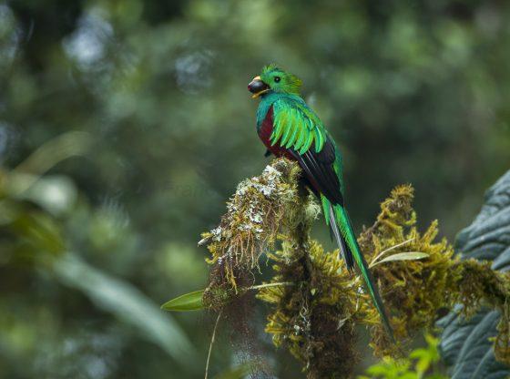 Partir à la découverte de la biodiversité costaricienne