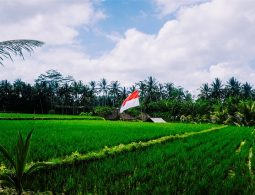 Green Agriculture Indonesian Grass Flag Paddies